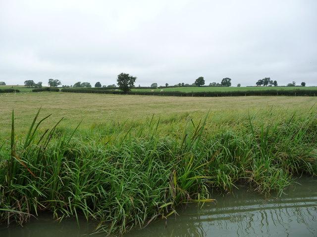 Lowland livestock farming, south-east of Debdale Grange