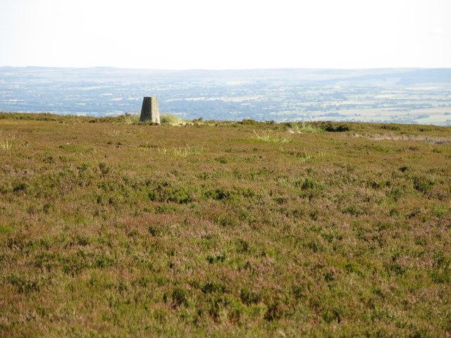 Monk's Moor around the trig point