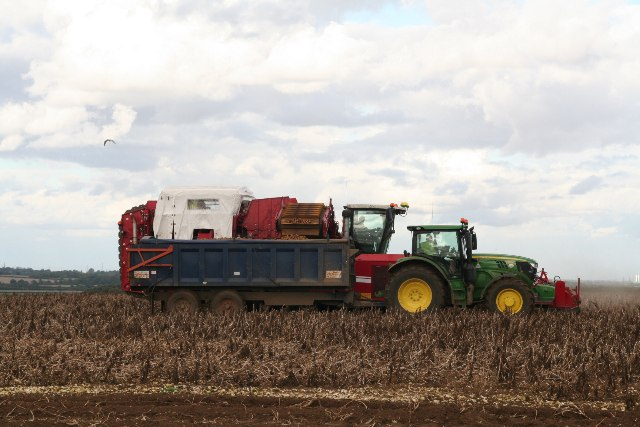 Campsite on a trailer? Potato picking near Hendale Wood