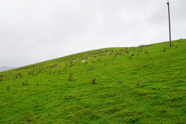 Hillside with sheep