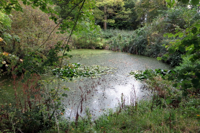 Pond in the woodland by the bridleway