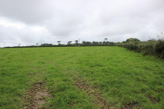 Pasture Field at Charton Cross
