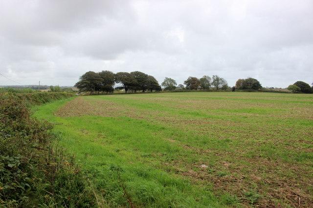 Fields at Charton Cross