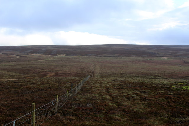 The Boundary Fence near Cabin Hill