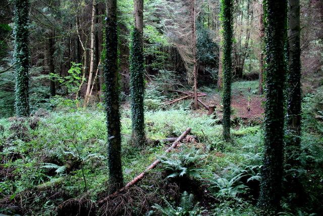 Woods in Yawl Bottom