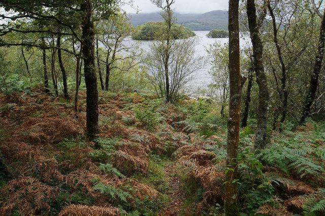 Small path down to Llyn Trawsfynydd