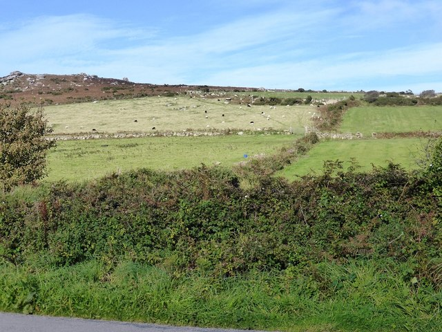 Fields with sheep next to road to Towednack