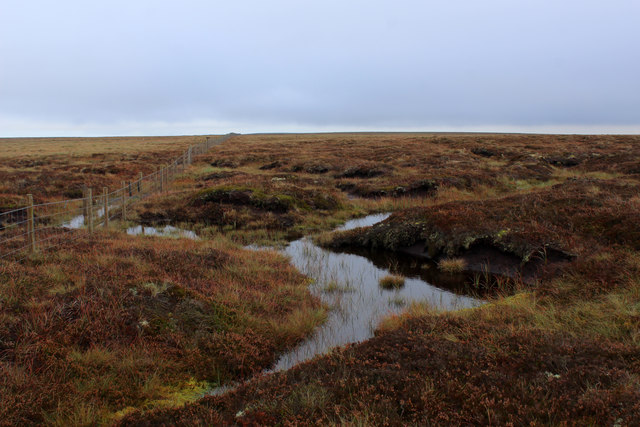 Peat Bogs on Virgin Moss