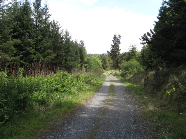View ENE along the main forestry road on Annaloughan Mountain