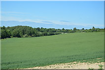 TL5337 : Farmland on the edge of Saffron Walden by N Chadwick