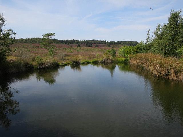 Decoy pond, Dersingham Bog