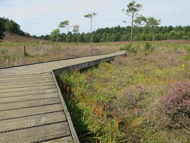 Boardwalk, Dersingham Bog