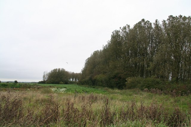 Wood containing Clarkson's Carr Farm. Worlaby