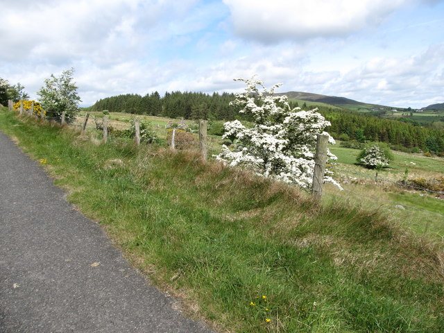Hawthorn in bloom with Mullaghattin Hill in the background