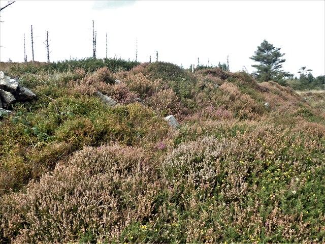 Path through heather on Annaloughan Mountain