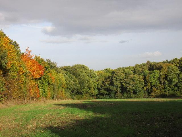 Stubbin Wood