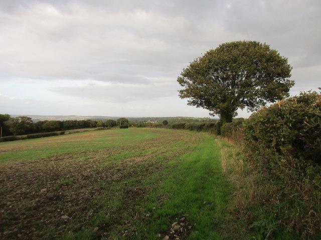 Field alongside Blackergreen Lane