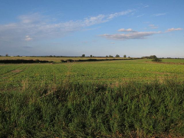 Field by Blackwater Lane