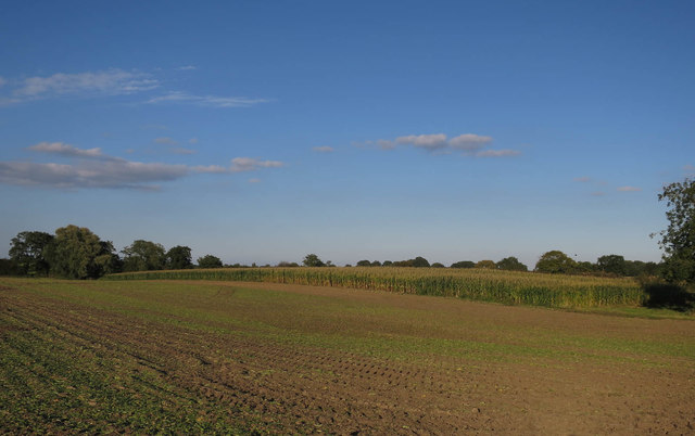 Field and maize
