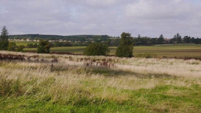 Arbikie Moor