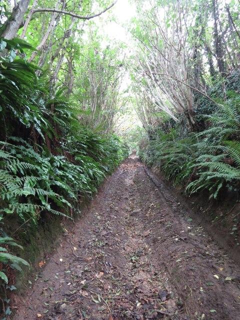 Lane at Loscombe
