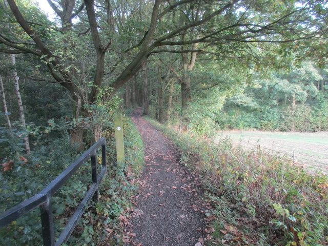 Entering Stubbin Wood