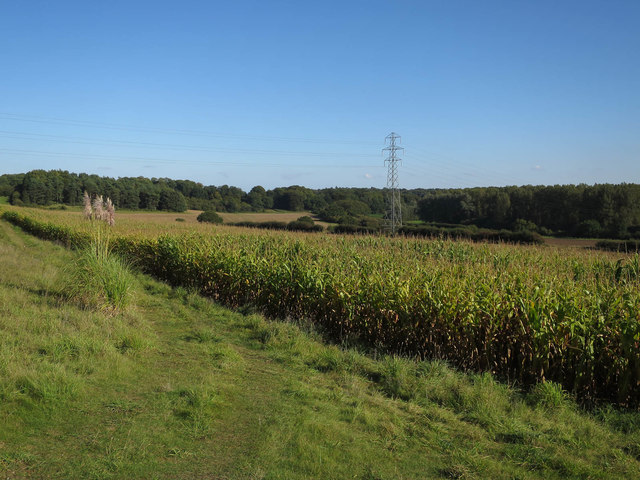 Pylon and maize strip