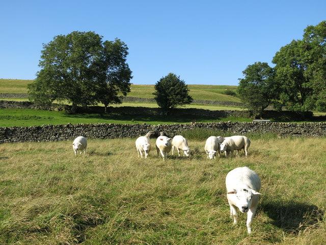 Pastures at Stanhope Gate