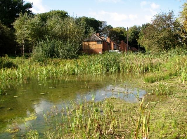 One of the ponds on Swardeston Common