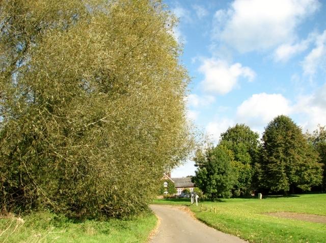 Road traversing Swardeston Common
