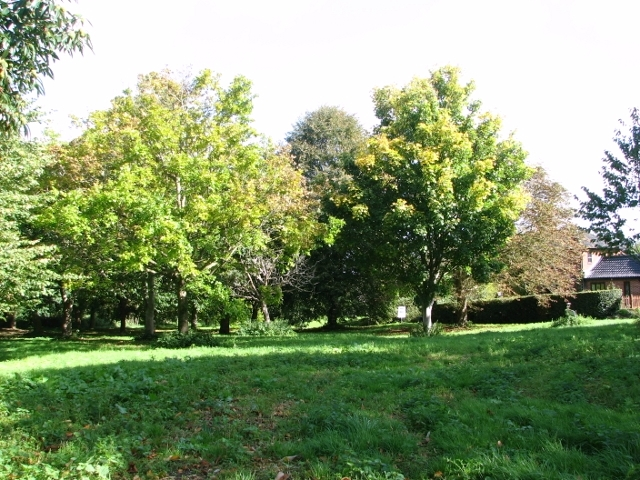Wooded area at High Common