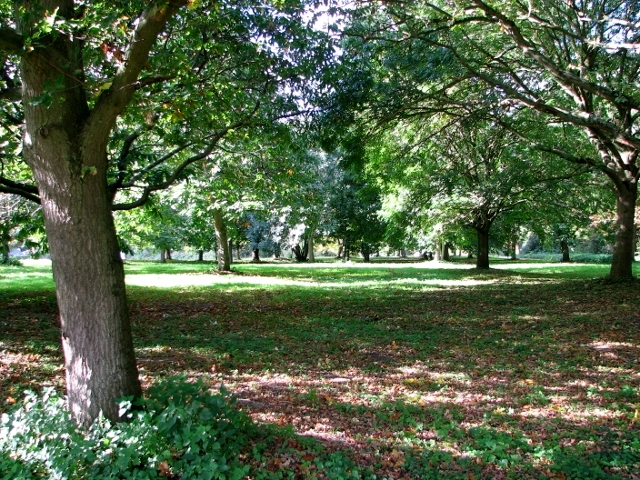 High Common in autumn