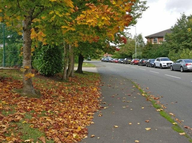 Autumn colours along Meridian East