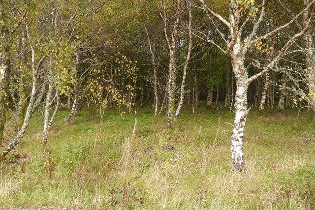 Birch wood, Balure of Shian