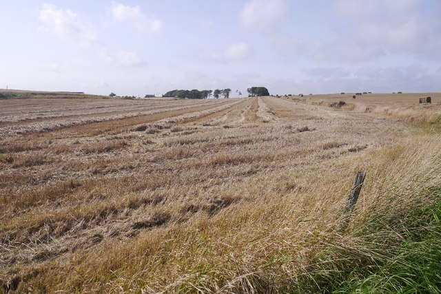 Straw and stubble, Drumbertnot