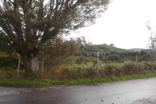 Felled area, Barcaldine