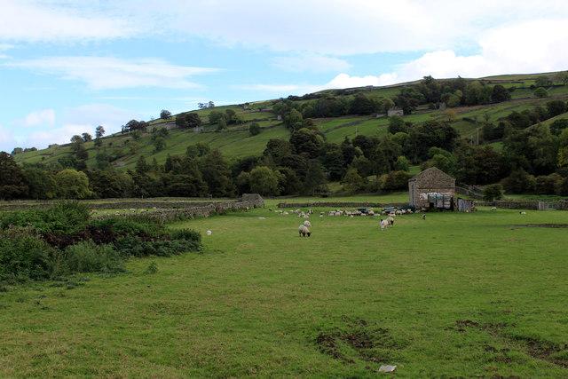 Pasture near Isles Bridge