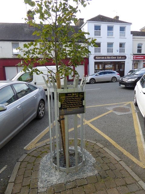 Commemorative tree in Market Street, Ardee