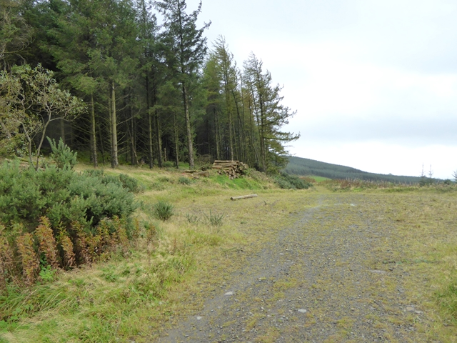 Forest track below Loughanleagh