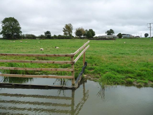 Sheep grazing west of Moss Farm