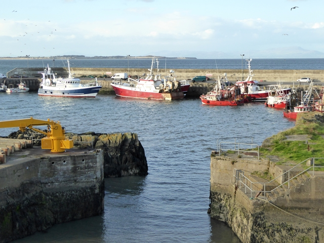 Fishing fleet at Port Oriel