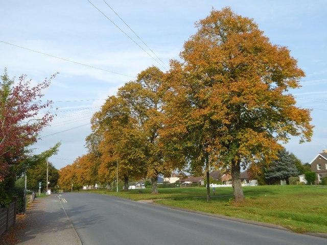 Autumn colours on Poolbrook Road