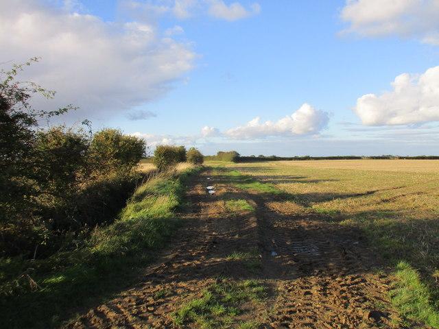 Muddy track, Bowbutts