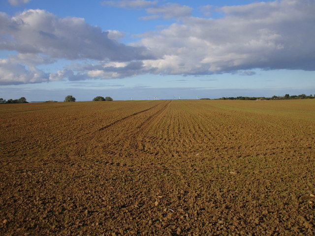 Prepared field, Dringhoe