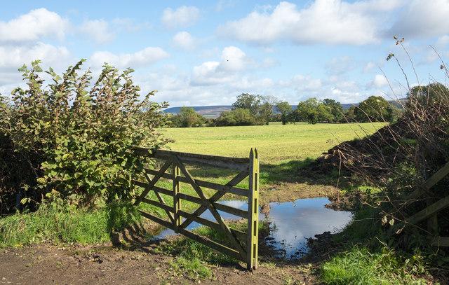 Field beyond open gate