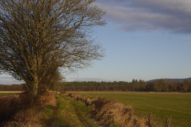 Road to Fullwood Moss