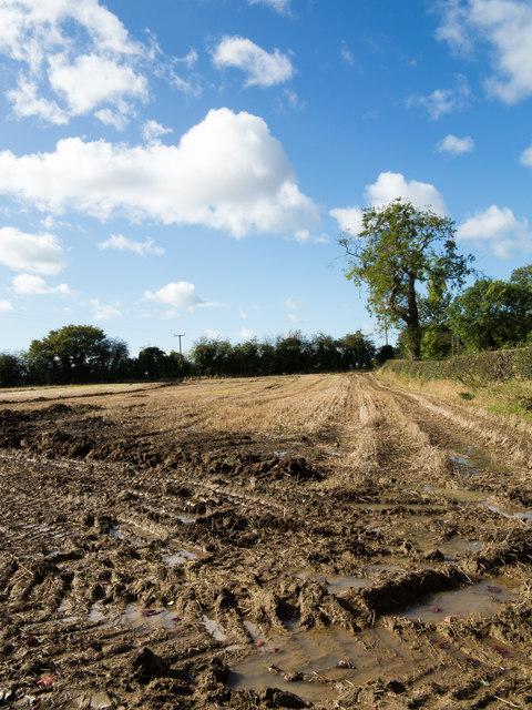 Wheel ruts in mud of stubble field