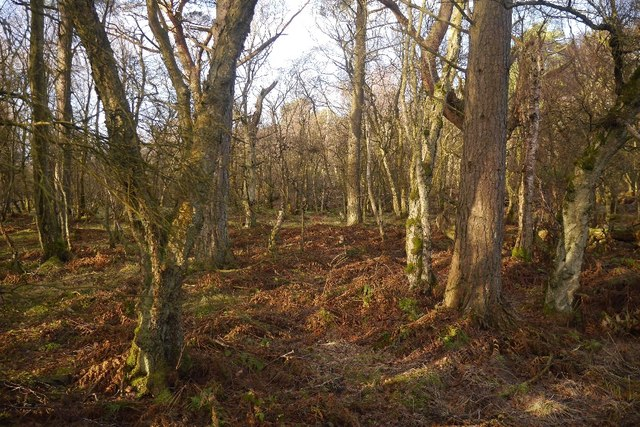 Woodland, Fulwood Moss
