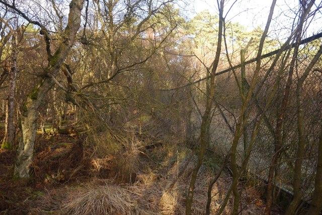 ROF Bishopton fence, Fulwood Moss