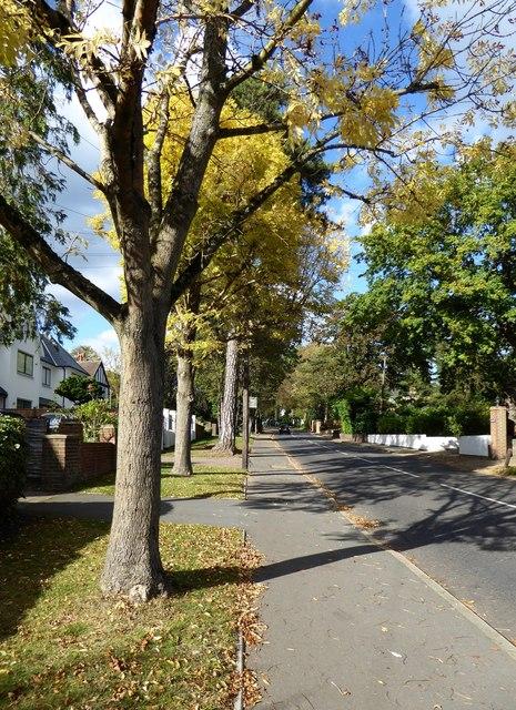 Traps Lane: view north towards Coombe Lane